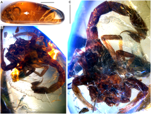 scorpion in amber